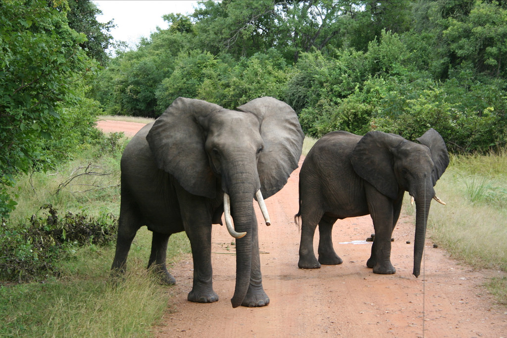 South Luangwa National Park Elephants