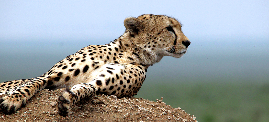 African Wildlife Tours