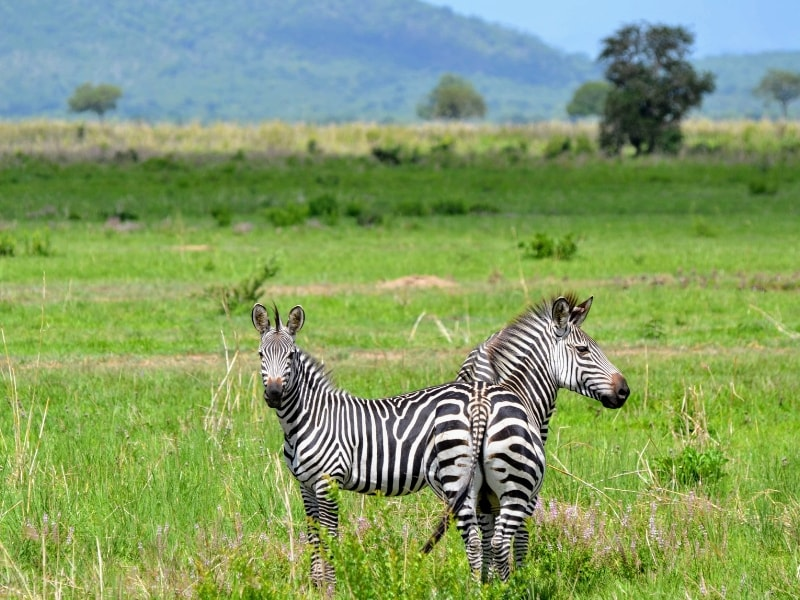 6 Days Explore Tanzania Safari-min