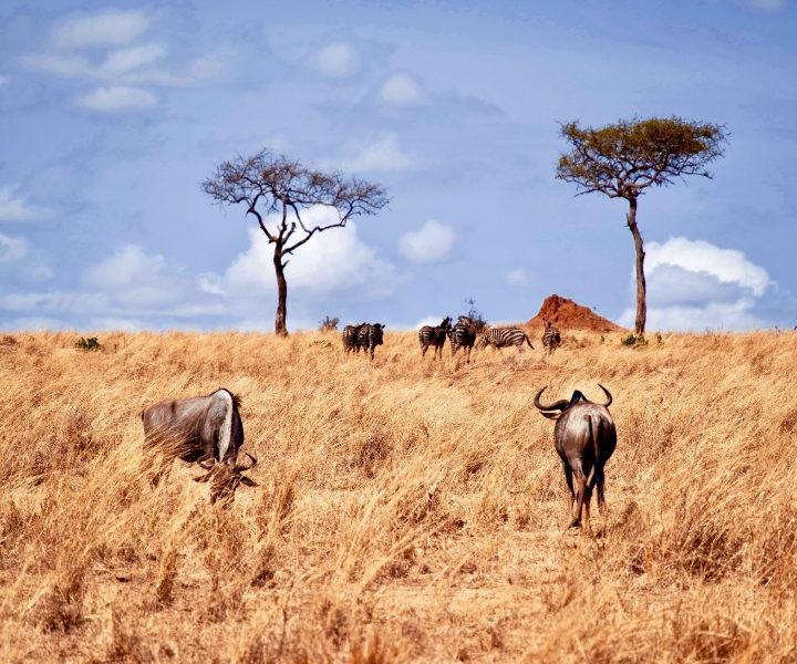 7 Days Soul of Tanzania Safari