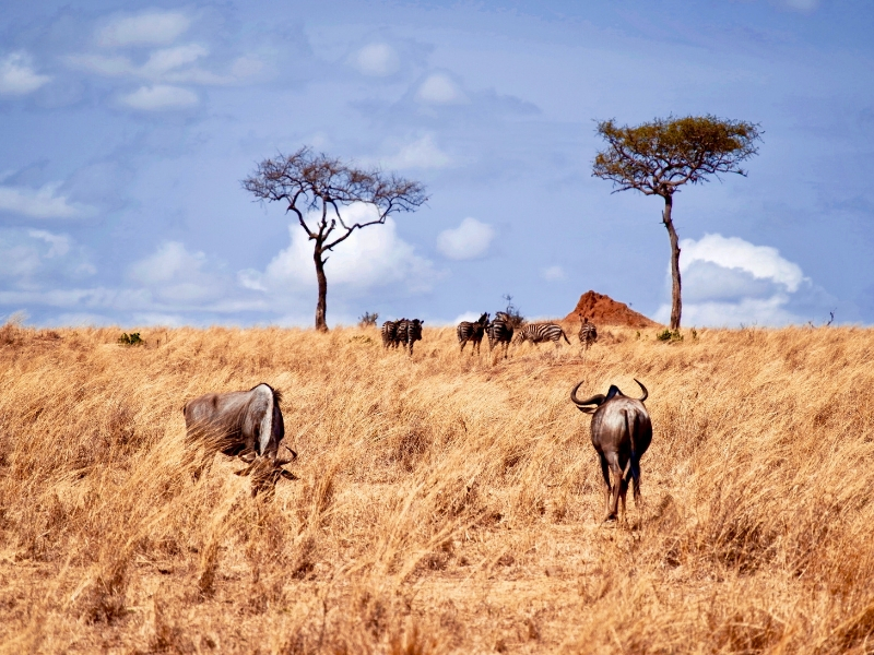 7 Days Soul of Tanzania Safari