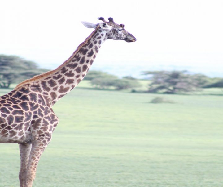 8 Days Discover Southern Tanzania Safari (Selous, Ruaha and Mikumi)