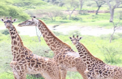 15 Days Best Southern Tanzania Circuit Safari
