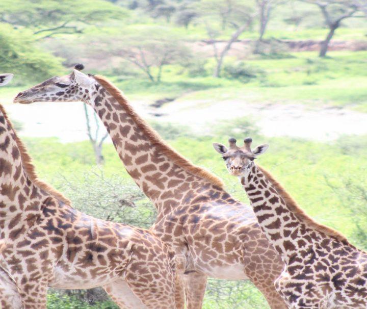 15 Days Best Southern Tanzania Circuit Safari