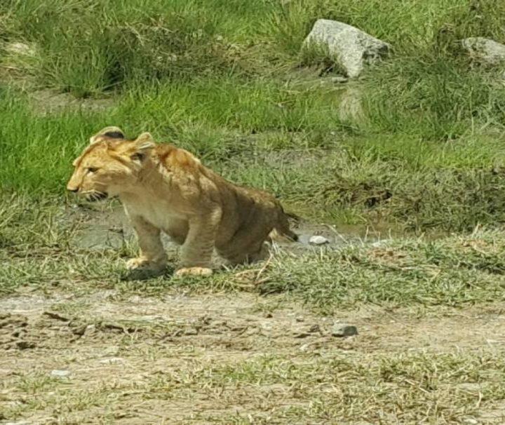7 Days Namibia Safari