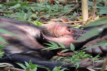 4 Days Chimpanzee Trekking Mahale Mountain National Park