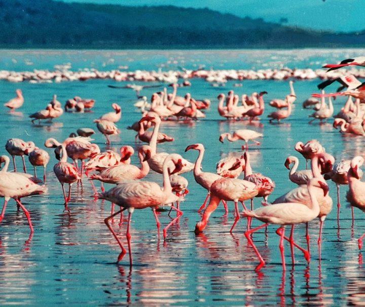 Enchanting Kenya Safari