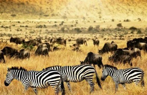 Best of Kenya Safari Tours - Kenya Must See