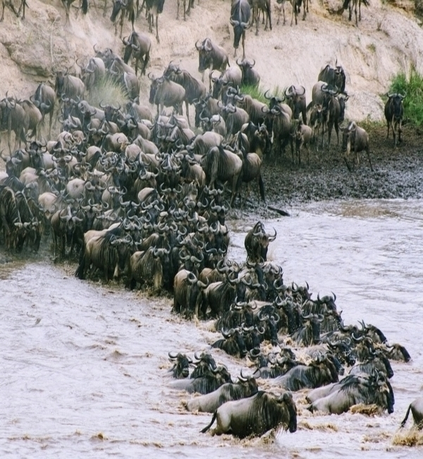 The Best Great Migration Tours by Season
