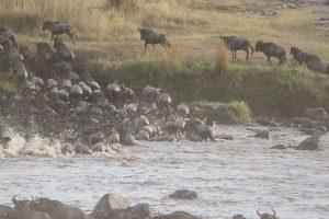 river crossing in Serengeti